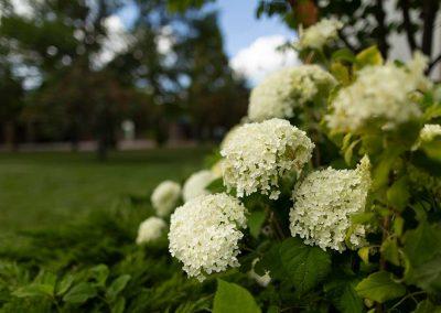 Flowers at the Nikka Yuko Japanese Gardens, Lethbridge, Alberta, Canada